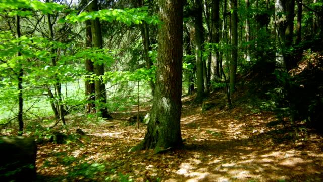 vídeos de stock, filmes e b-roll de gimbal passando pela spring forest (4 km/uhd para hd) - ponto de vista de câmera