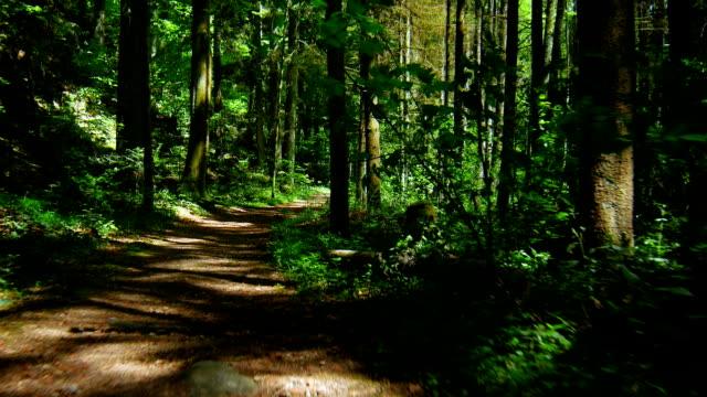 ジンバル式可動年春の森(4 K /UHD HD )
