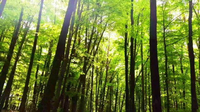 Bewegung durch Frühlingswald