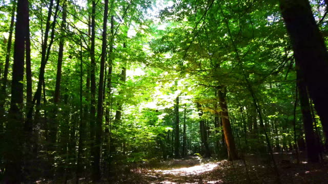 moving through spring forest - beech tree stock videos and b-roll footage