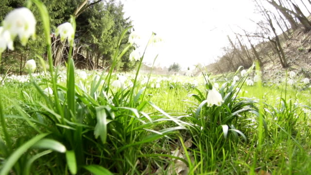 hd super slow-mo: moving through spring snowflakes - snowdrop stock videos and b-roll footage