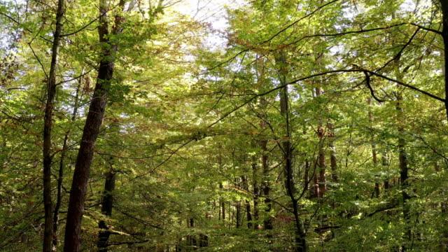 Se déplaçant à travers la forêt ensoleillée en automne