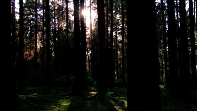 vídeos de stock, filmes e b-roll de gimbal realizando ensolarada spring forest (4 km/uhd para hd - ponto de vista de câmera