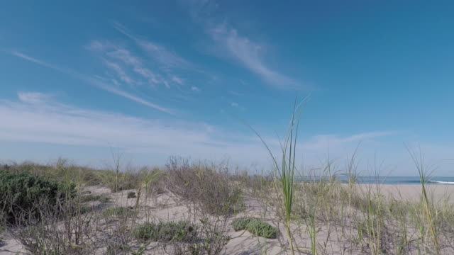 moving through the green grass on the beach sand - marram grass stock videos and b-roll footage