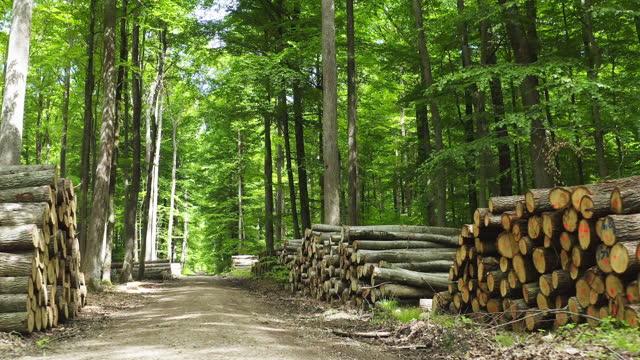 春の木材林を移動 - 木材産業点の映像素材/bロール