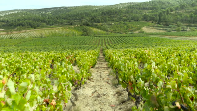 Moving toward in vineyard