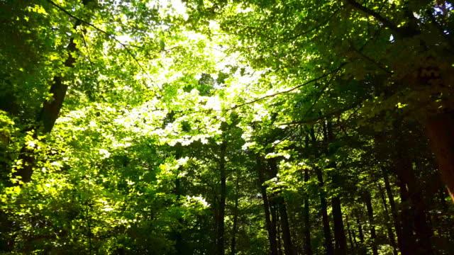 谷春の森林を移動