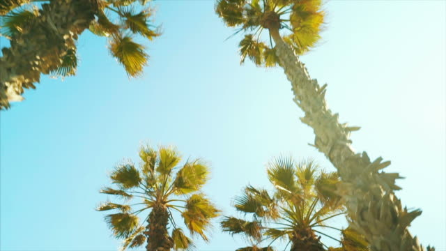 moving under the palm trees. - low angle view stock videos & royalty-free footage