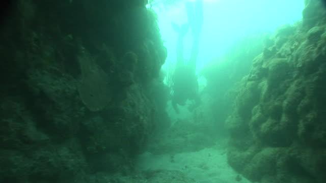vidéos et rushes de moving up coral reef trench behind swimming scuba diver diving recreation curiosity adventure sport hobby - mer des caraïbes