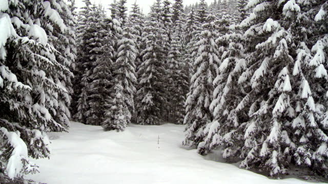 Moving Up Through Winter Forest