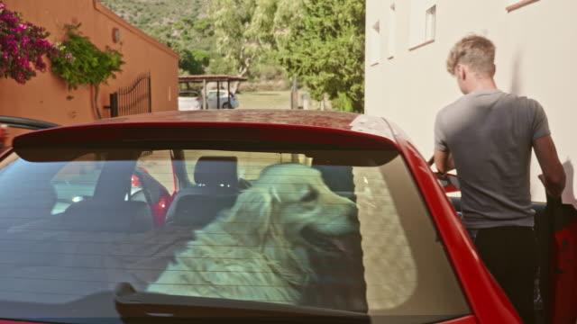 vidéos et rushes de vidéo émouvante du père et de son fils adulte partant avec la voiture pour un week-end de randonnée avec leur chien - golden retriever