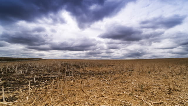 mowed agriculture field with dramatic clouds - stubble stock videos & royalty-free footage