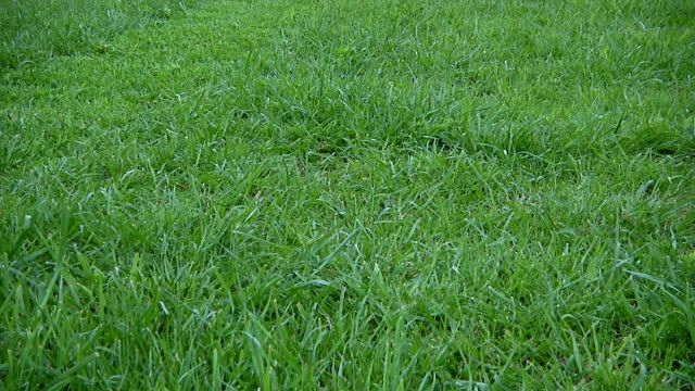 mowing grass - mowing stock videos & royalty-free footage