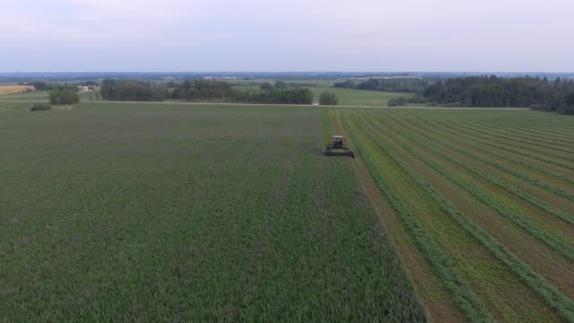 mowing hay - hay isolated stock videos & royalty-free footage