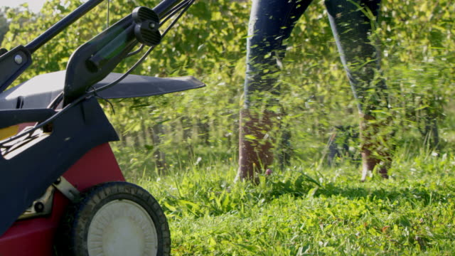 slo mo mowing the grass in a vineyard - prato rasato video stock e b–roll