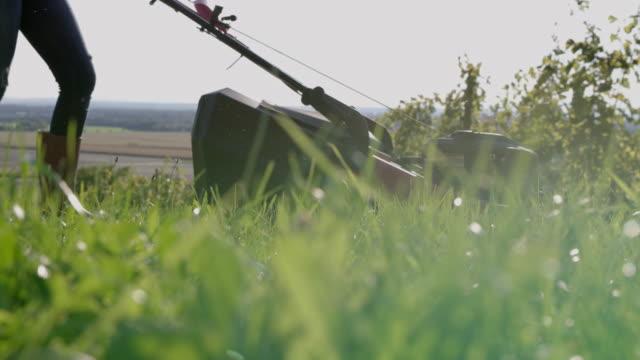 slo mo klippa gräset i en vingård - gräsmatta odlad mark bildbanksvideor och videomaterial från bakom kulisserna