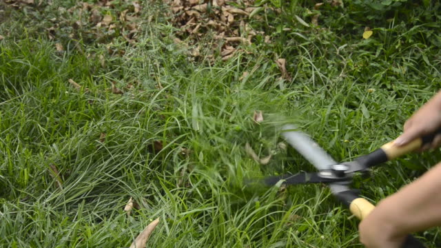 mowing - realisticfilm stock videos and b-roll footage