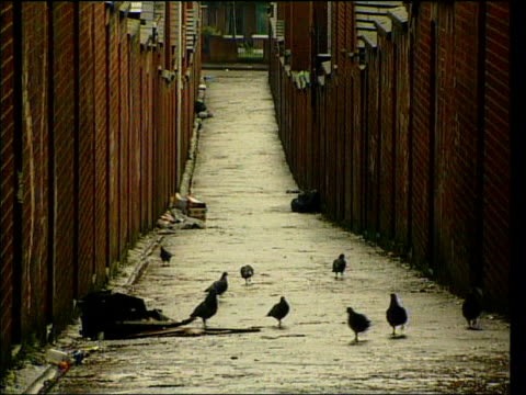 Mowlam seeks end to punishment attacks ITN Pigeons in alleyway CF = B0274722 or B0279601 200255 to 200428 MIX Order Ref BSP250199021