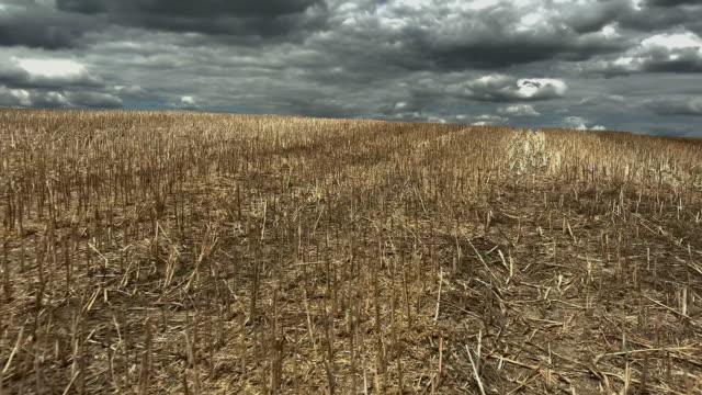 vídeos de stock e filmes b-roll de mown agriculture field - seco