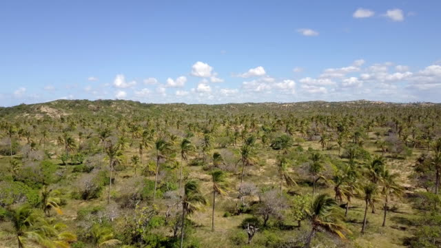mozambique tofo palm plantation vegetation - palm tree stock videos & royalty-free footage