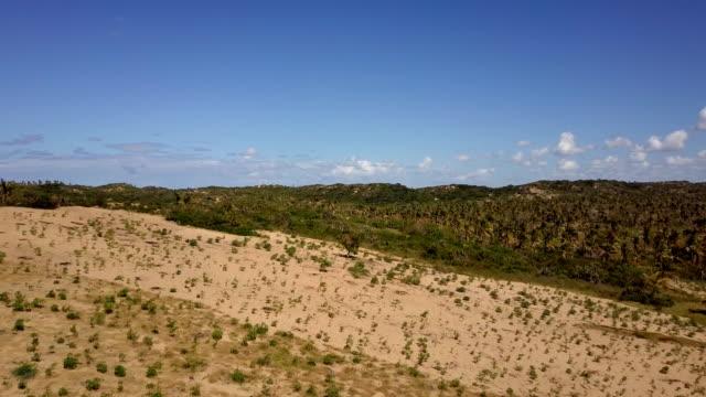 vídeos de stock e filmes b-roll de mozambique tofo palm plantation vegetation - moçambique