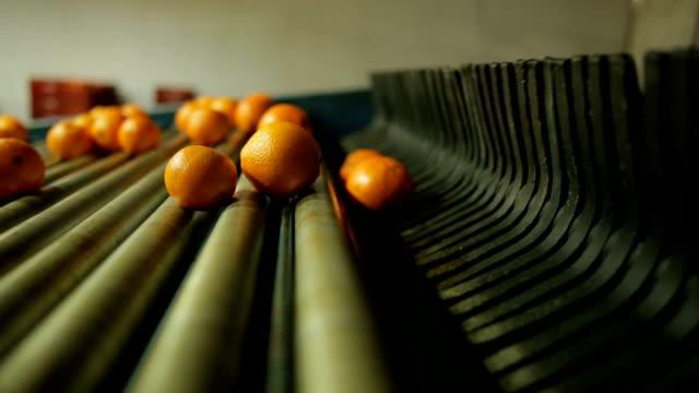 máquina funcionando em indústria de laranja - citrusfrukt bildbanksvideor och videomaterial från bakom kulisserna