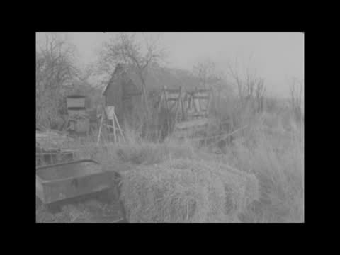 stockvideo's en b-roll-footage met mrs muriel mckay murder:; b) england: hertfordshire: stocking pelham: rooks farm: ext gv police search thicken zoom in as move branches police dig... - crime and murder