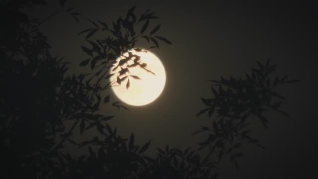msêfull moon at night, beijing, china - full moon stock videos & royalty-free footage