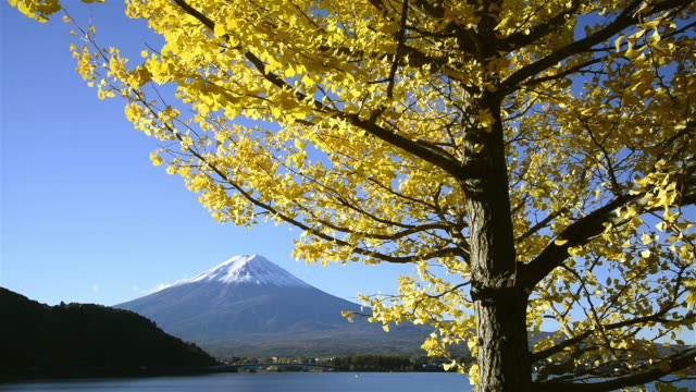 mt. fuji and a ginko tree - 2013 stock videos & royalty-free footage