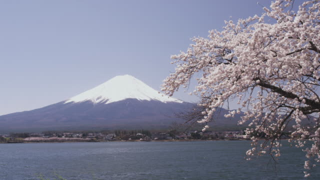 Mt. Fuji and cherry blossoms at Lake Kawaguchi