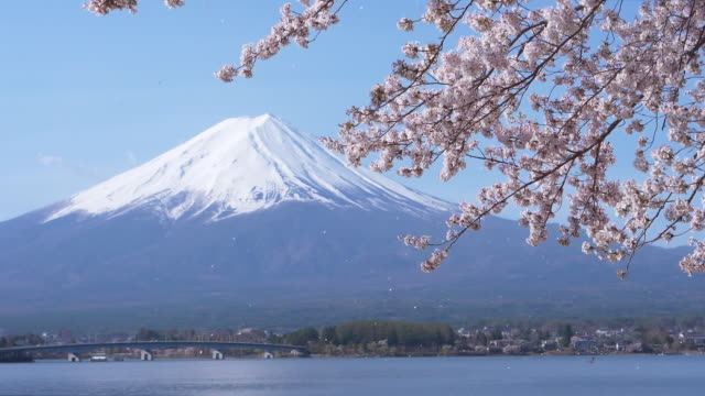 mt. fuji and cherry blossoms falling in the wind (slow motion) - 桜の花点の映像素材/bロール