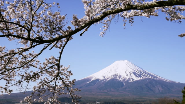 mt. fuji and cherry blossoms subtly swinging in the breeze - 1 minute or greater stock videos & royalty-free footage