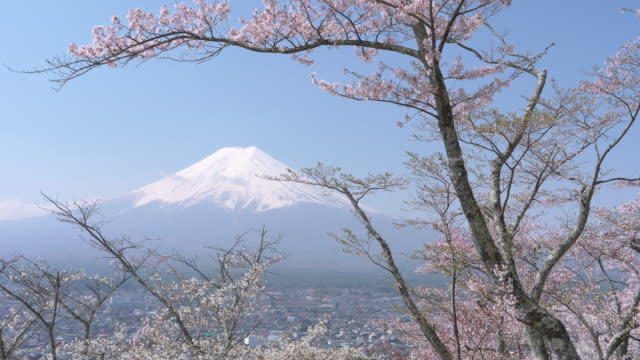 mt. fuji and cherry blossoms - jp201806 stock videos and b-roll footage