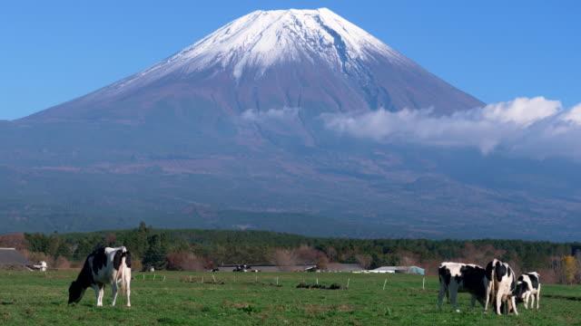 vídeos de stock e filmes b-roll de mt. fuji and holstein cows at asagiri plateau - gado holstein friesian