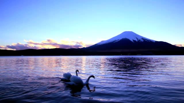 Mt Fuji and Swan Couple Swimming at dusk