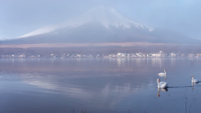mt. fuji and swans reflected in lake yamanaka in a foggy morning (time lapse/zoom in) - mar stock videos & royalty-free footage