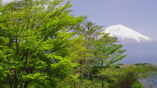 mt. fuji and tree with green leaves - 10 seconds or greater stock videos & royalty-free footage