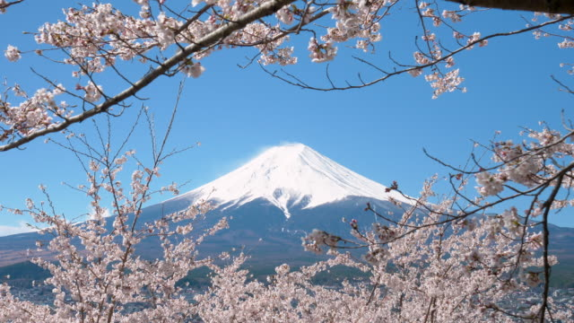 mt. fuji framed with cherry blossoms (tilt down) - cherry blossom stock videos & royalty-free footage