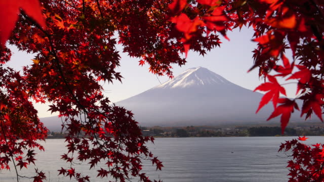 mt. fuji in autumn with red maple leaves at kawaguchigo lake japan - maple stock videos & royalty-free footage