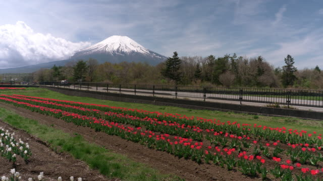 mt. fuji over a field of red tulips - 山梨県点の映像素材/bロール