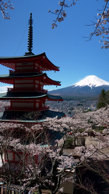 mt. fuji over cherry blossoms and a pagoda (vertical) - national landmark stock videos & royalty-free footage