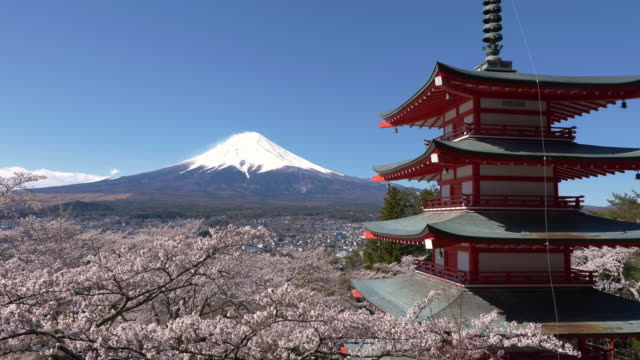 mt. fuji over cherry blossoms and a pagoda - mt fuji stock videos & royalty-free footage