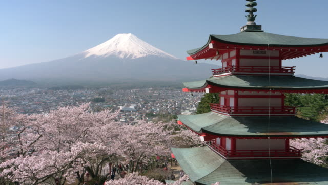 mt. fuji over cherry blossoms and a pagoda - pagoda stock videos & royalty-free footage