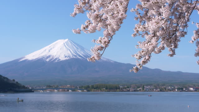 mt. fuji over cherry blossoms swaying in the wind - swaying stock videos & royalty-free footage