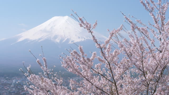 mt. fuji over cherry blossoms - jp201806 stock videos and b-roll footage