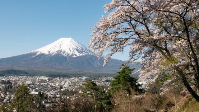 Mt. Fuji over Cherry Blossoms