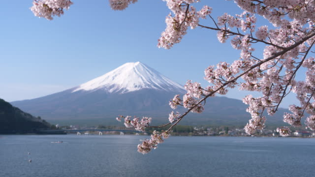 mt. fuji over lake kawaguchi and cherry blossoms - mt fuji stock videos & royalty-free footage