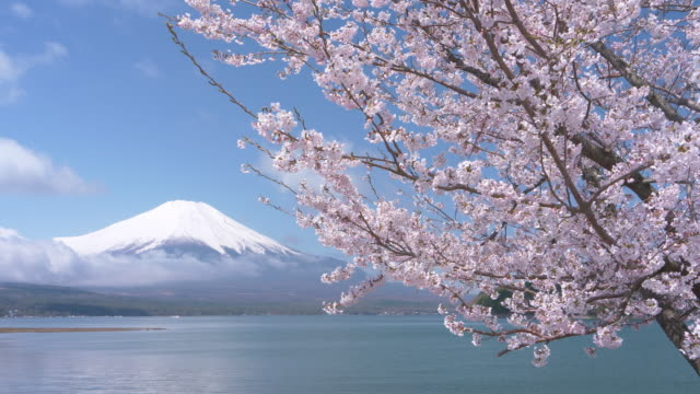mt. fuji over lake yamanaka and cherry blossoms - jp201806 stock videos and b-roll footage