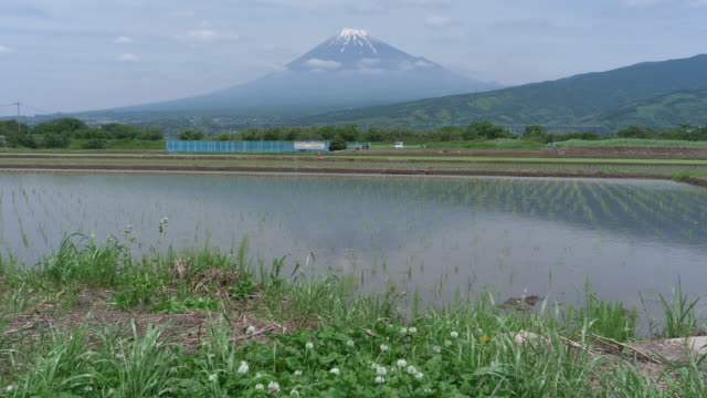 mt. fuji over rice fields in spring - 水田点の映像素材/bロール