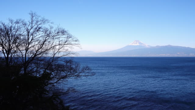 vidéos et rushes de mt. fuji over the sea (izu) - arbre sans feuillage